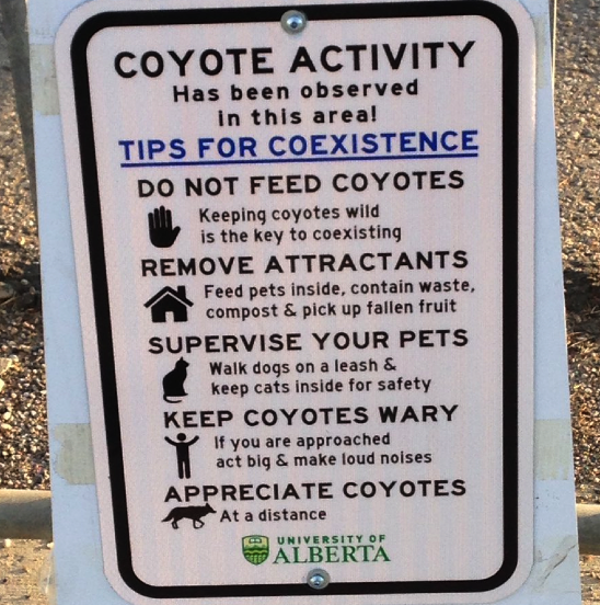 Tips for coyote coexistence- do not feed, remove attractants, supervise pets, keep coyote wary, appreciate coyotes