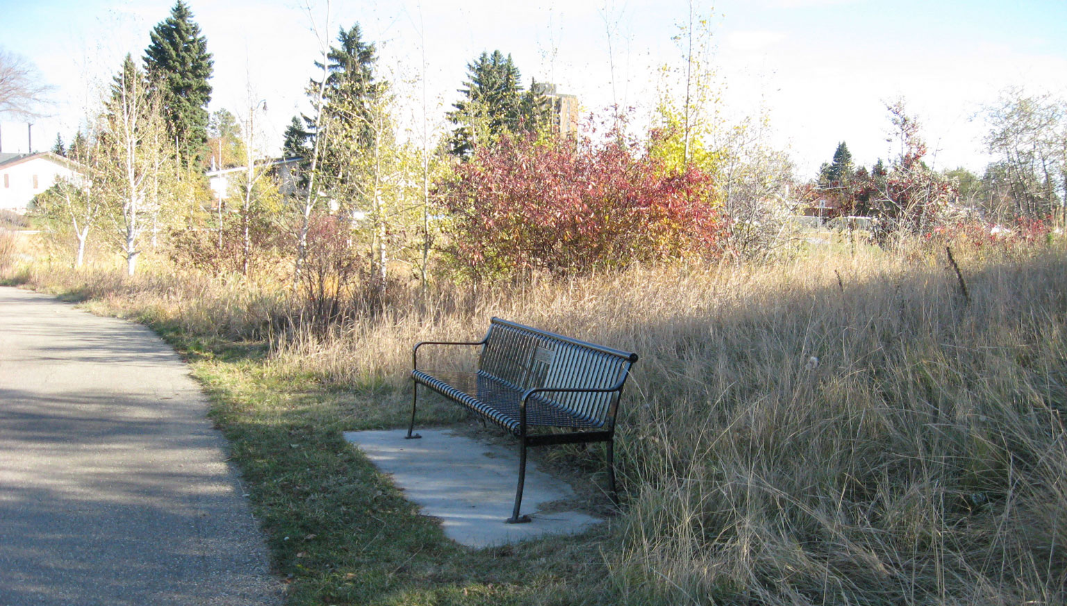 Bench at the Naturalized area Oct 2018 MK